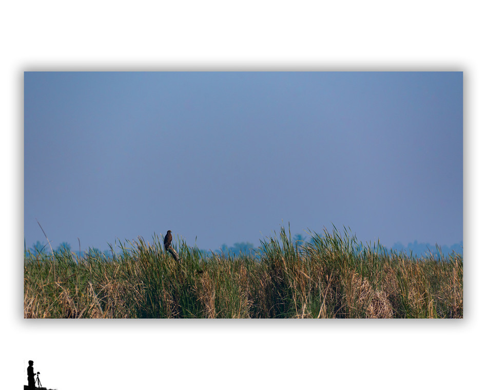 spotted eagle minimalistic hosakote
