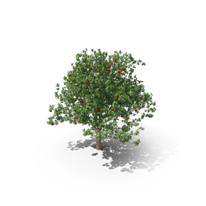 smallApple-Tree.G03.2k.png