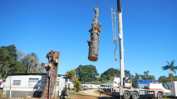 Pine-tree-removal-2.jpg