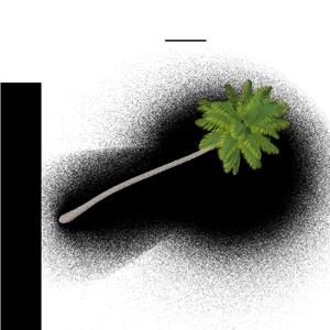 smallPalm-Tree.C08.2k.png