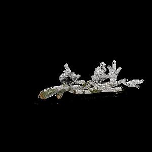 smallFallen-Birch-Tree.H03.2k.png