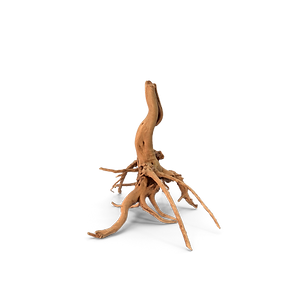 smallTree-Roots.H03.2k.png