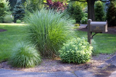 Mix of Ornamental Grasses with Perennials