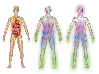 tripart illustrations of human body. 1. front view, visible cardiovasculature and GI tract, nerves. 2. posterior view, opaque. Front view, opaque
