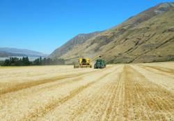 HIGH COUNTRY FARM