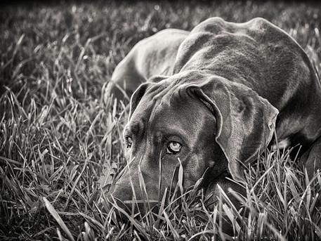 Hundefotograf Luzern