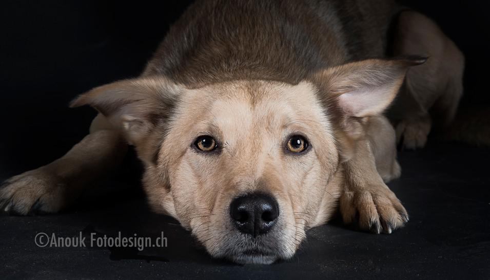 Tierfotograf Sursee Hundefotos