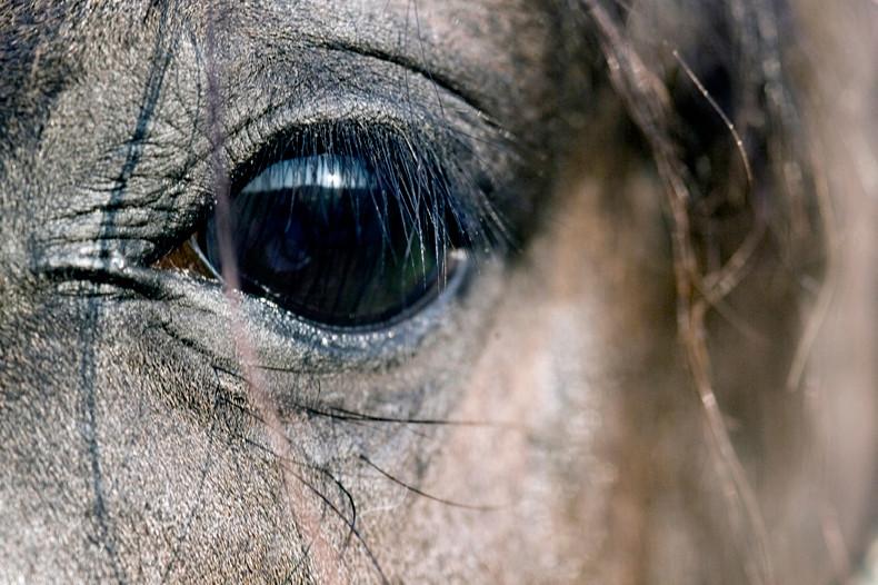 Pferdefotograf Sursee