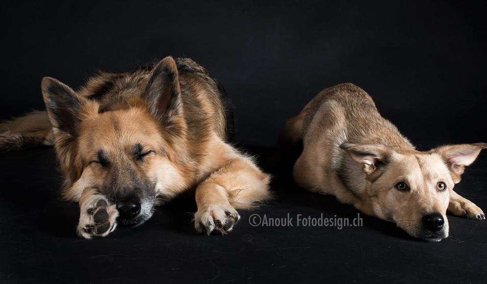 Hundeportrait Sursee