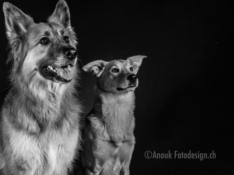 Hundefotograf Sursee