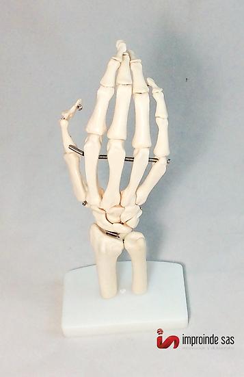 Mano Humana Con Músculos y Ligamentos