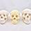Thumbnail: Cráneo Humano Estandar (3 Versiones)