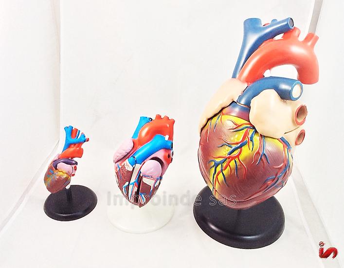 Corazón Humano (6 versiones)