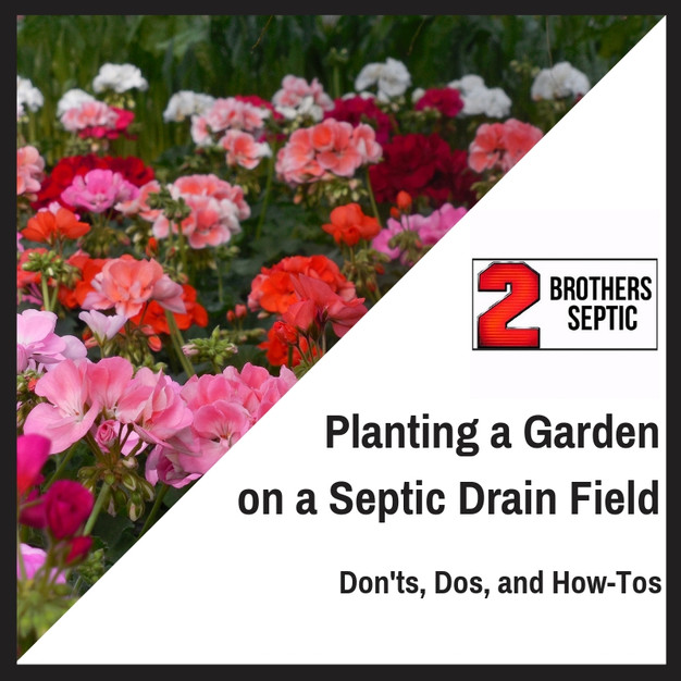 Can You Plant A Garden Over A Septic Drain Field