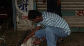 Anti Rabies Camp on 05-08-2012 at Shashtri Nagar and Gandhi Nagar with Rotaract Club