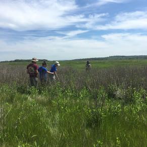 Marsh Field Sites