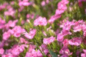 栃木県-真岡市-宇都宮市-aroma-アロマ-リラクゼーション-マッサージ-エス