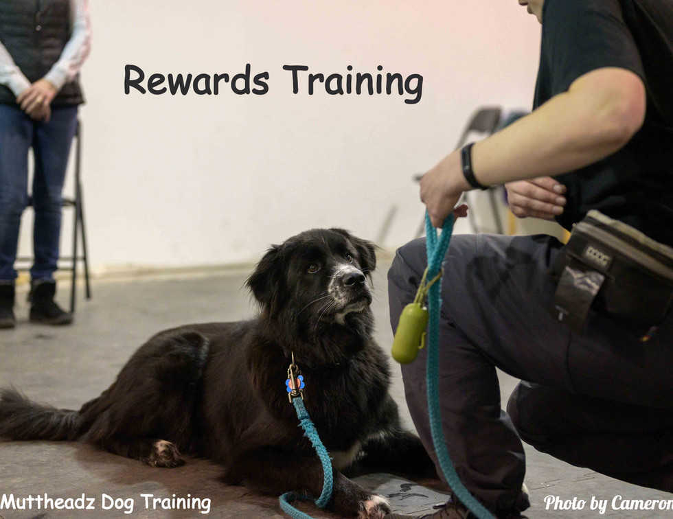 Muttheadz Rewards Training