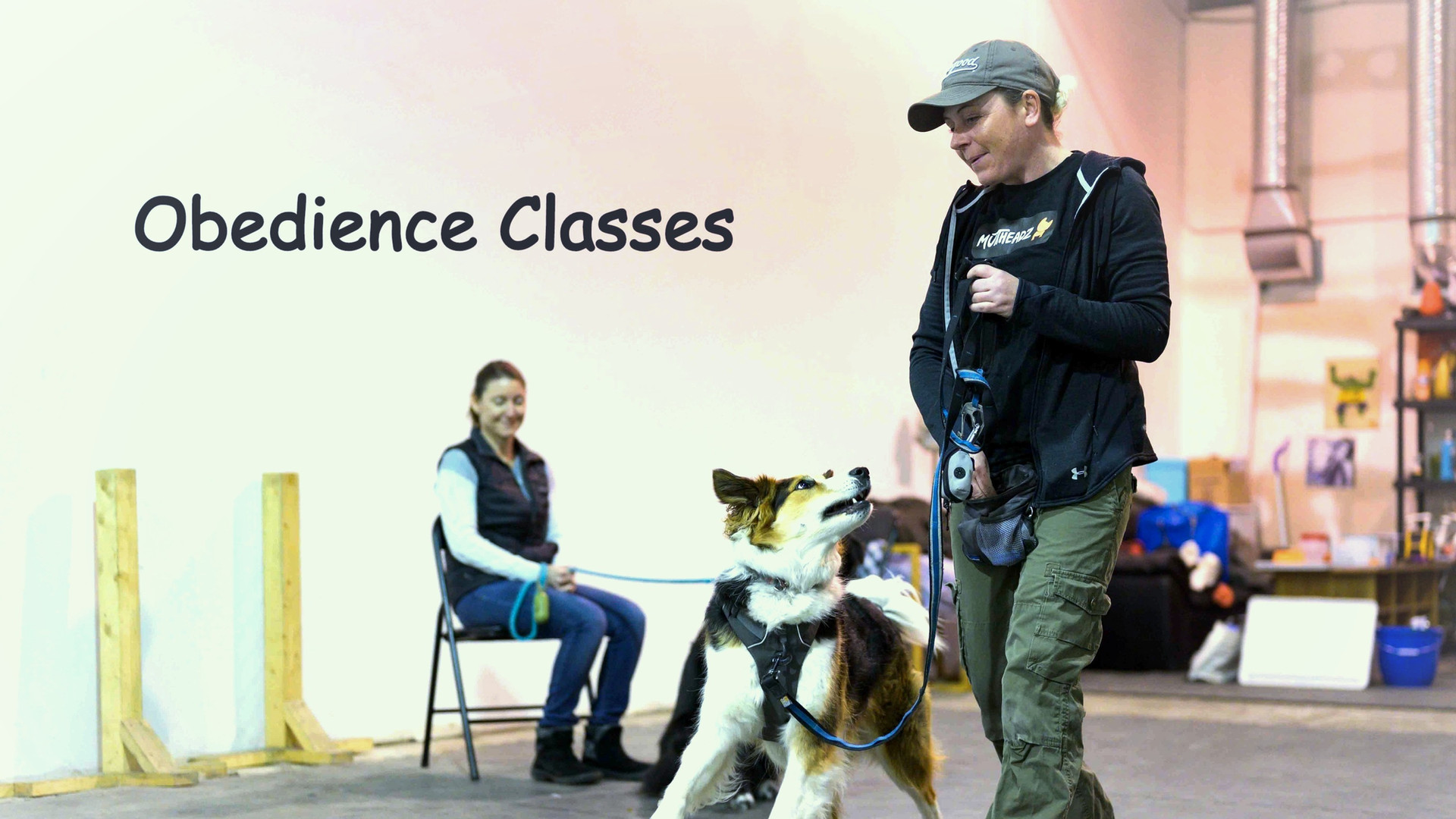 Muttheadz Adult Dog Obedience Class