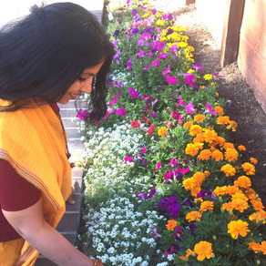 Summer Self Care with Ayurveda: Wisdom Teachings from my Vedic Lineage