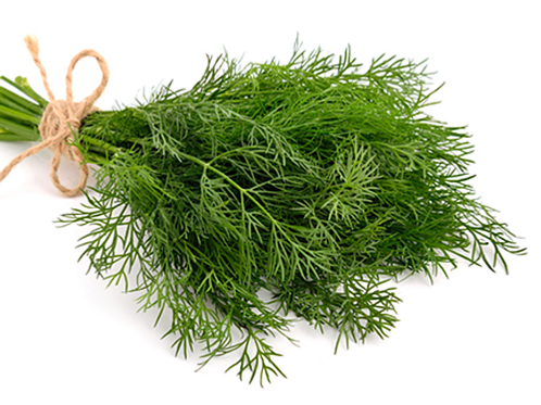Dill  Infused EVOO