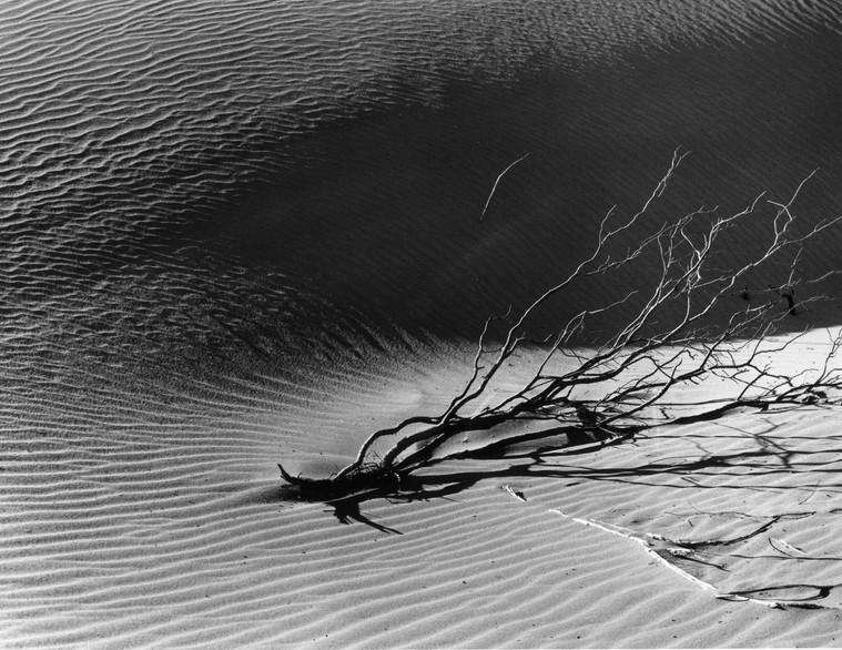 Mesquite Dunes 1, Death Valley