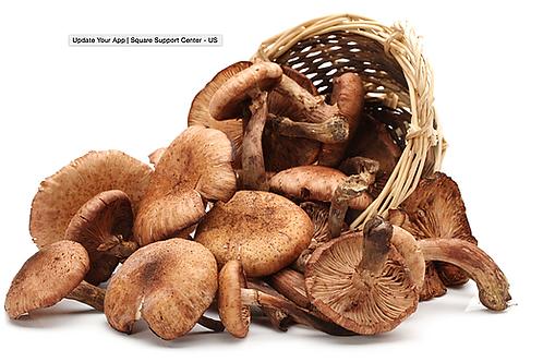 Porcini Mushroom & Sage Infused EVOO