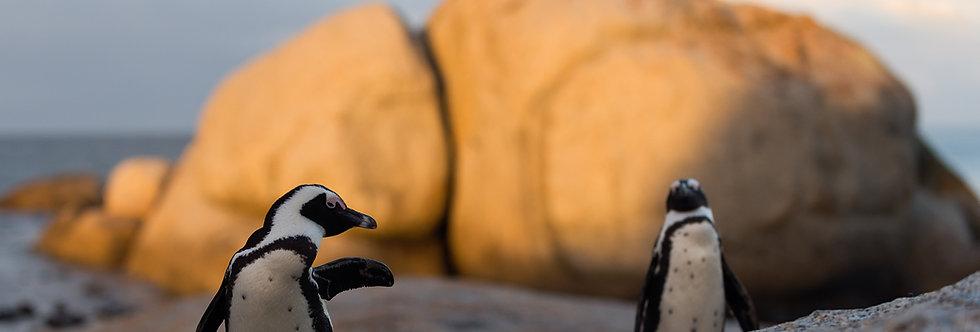 Sudáfrica Pingüinos: Seguro de cancelación