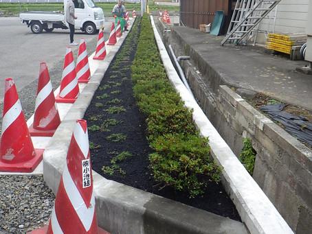 駐車場の植栽が生まれ変わりました🌲🌲🌲🌲🌲