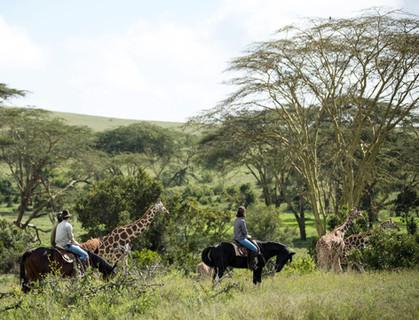 horses and giraffe.jpg