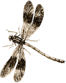 dragonfly-954411_1280.png