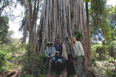 Ficus thonningii - NN forest - 1.jpg
