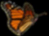 butterfly-nolegs-2.png