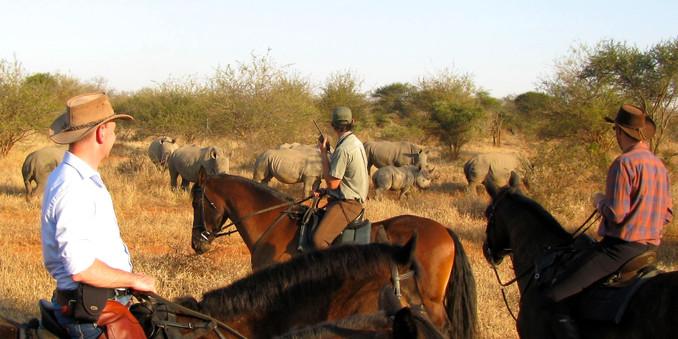 Wait a Little Safaris