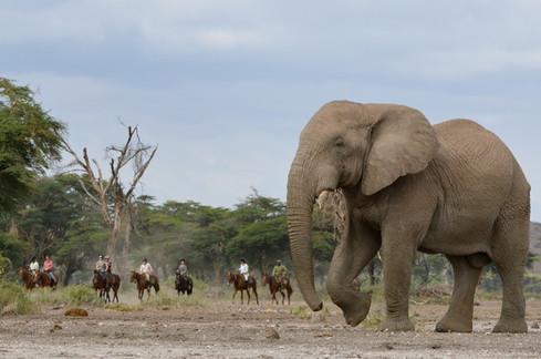 Kilimanjaro Elephant ride  36 copy.jpeg