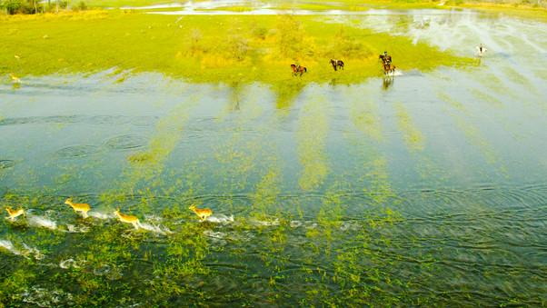 Okavango Horse Safaris
