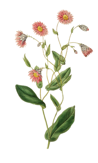 plant-3066866_1920.png