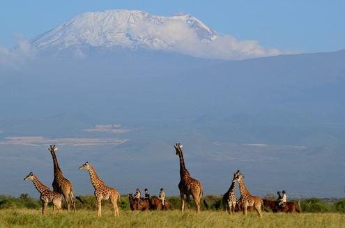 Kilimanjaro Elephant ride  110 2.jpeg