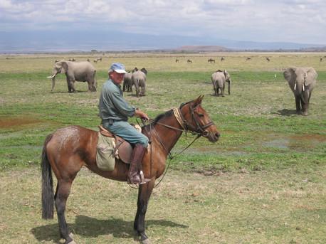 Offbeat Safaris - Amboseli elephant herd