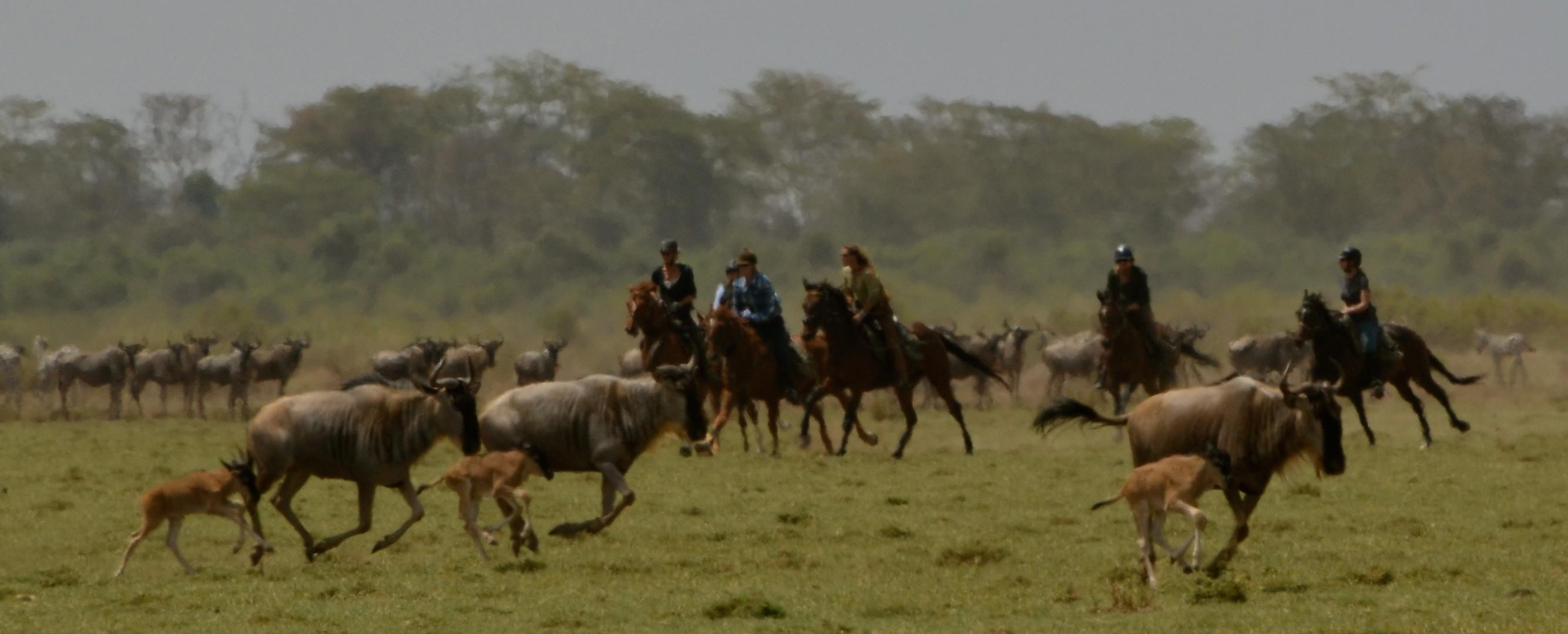 Kaskazi Horse Safaris