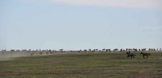 Serengeti  31.jpeg
