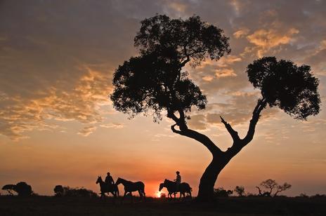 Offbeat Safaris - Mara Sunset.tif