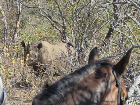 waitalittle rhino.jpg