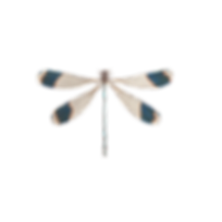 dragonfly-1541241_1920.png
