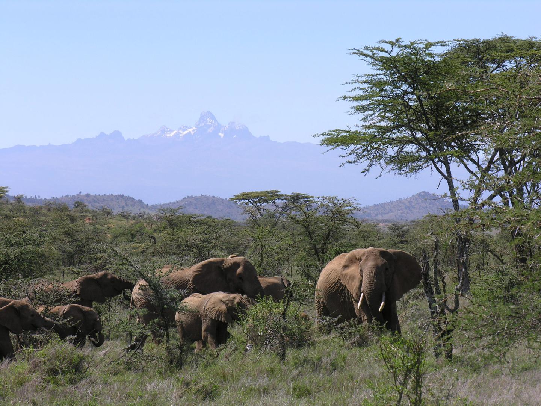 Charlie - breese and chedraui safari 036