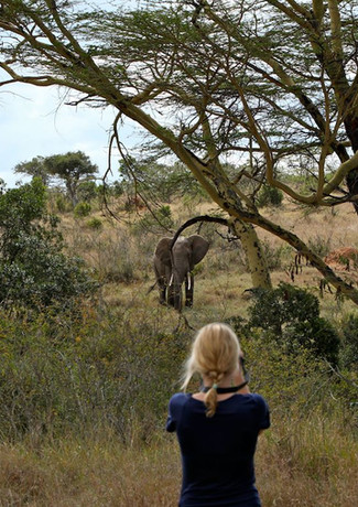 Game viewing from the lodge