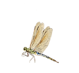 Dragon Fly.png