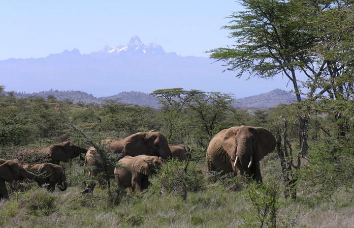 Elephants on Lolldaiga