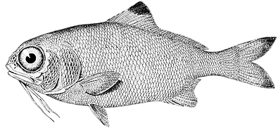 fish-976080_1280.png