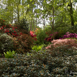 Parc_Floral_de_Paris-34-cliche_Jean_Webe